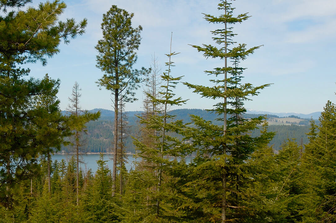 lot 36 view | The Preserve at Gotham Bay | Coeur d'Alene, Idaho